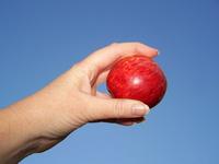 an-apple-a-day-1328005